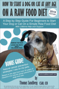 how to start dog or cat on a raw food diet