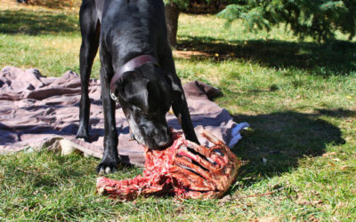 Dogs & Cats are CARNIVORES they are NOT omnivores like human beings!