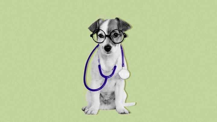 How Your Dog Knows When You're Sick